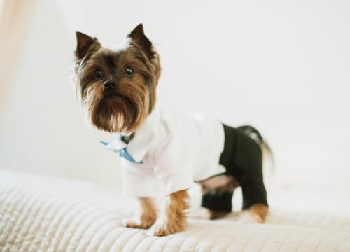 家庭の獣医学