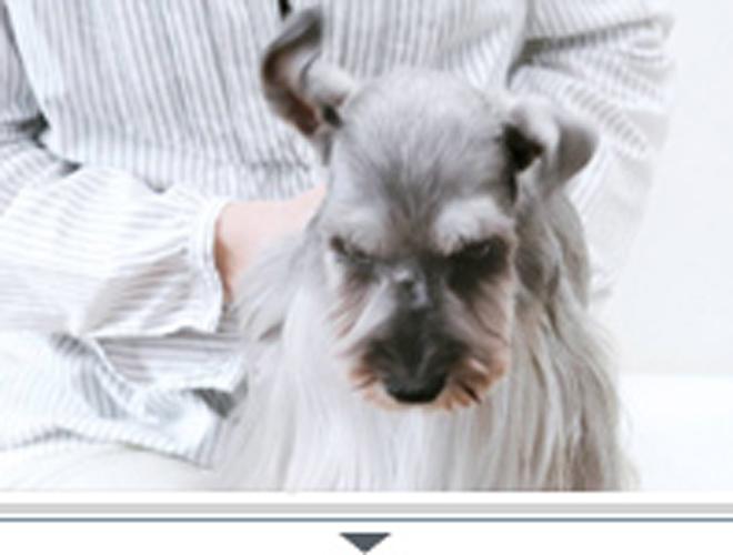 犬は耳を左右にふります